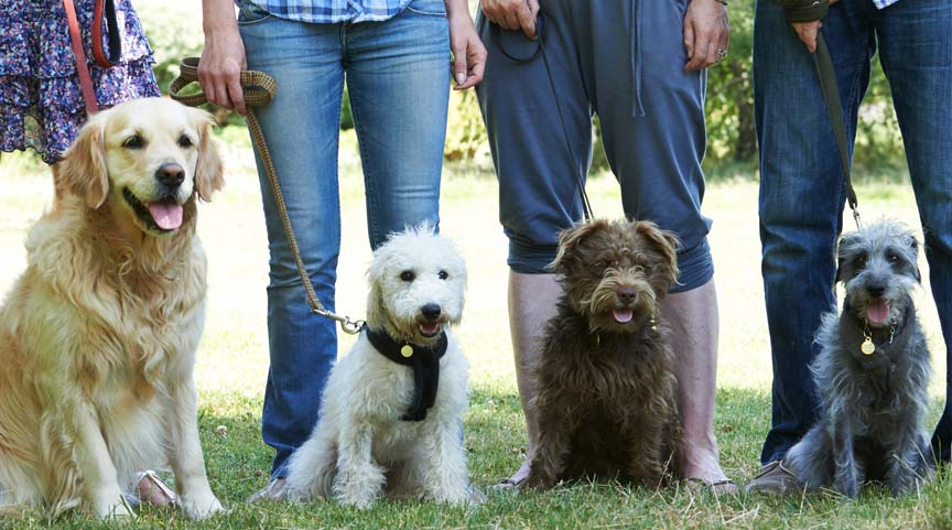 We offer group training classes for dogs in Chico California.